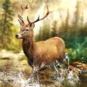 Budata Hunting Clash